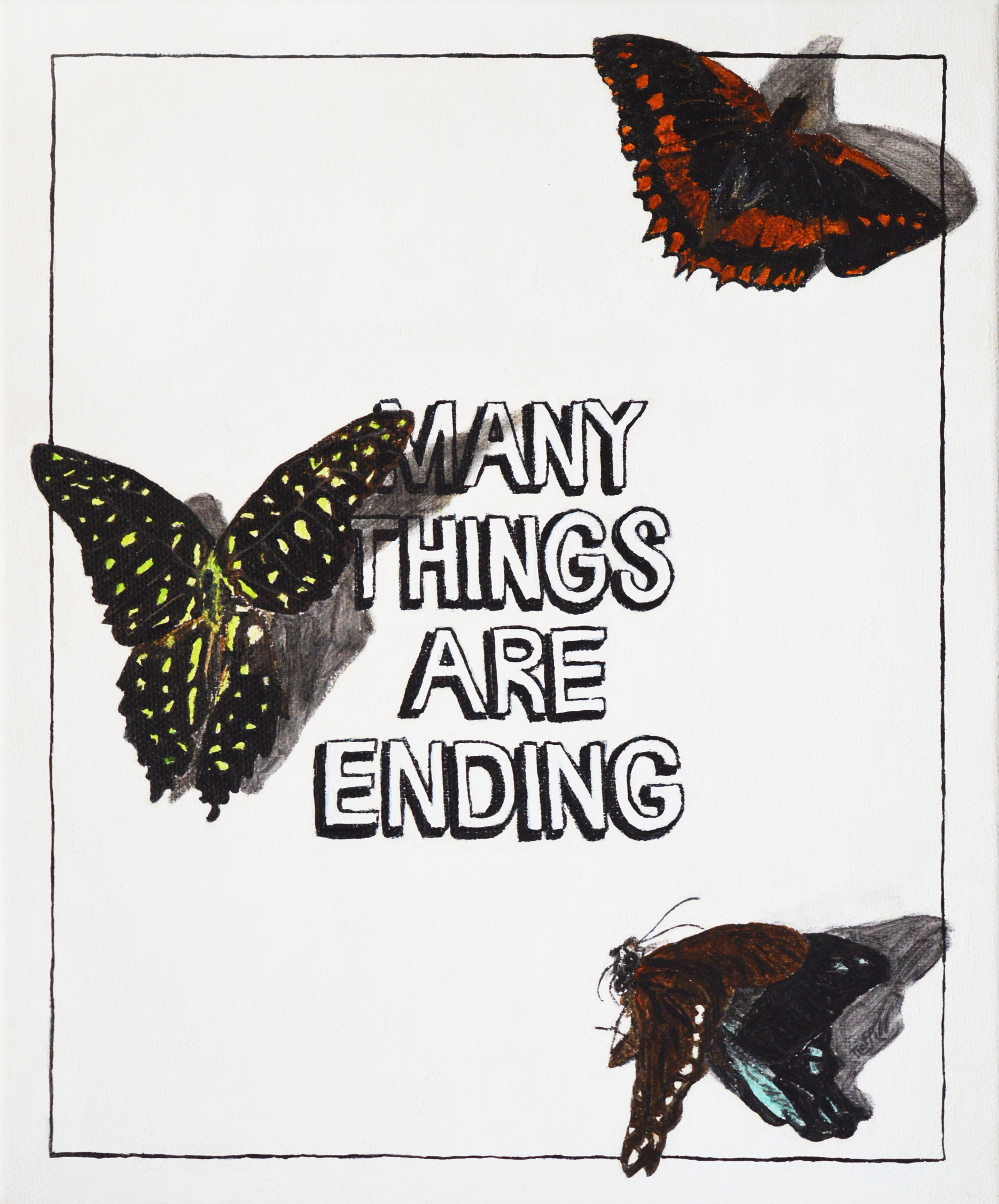manythingsbutterflies